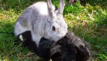 Animales hermafroditas diario animales - Imagenes de animales apareandose ...