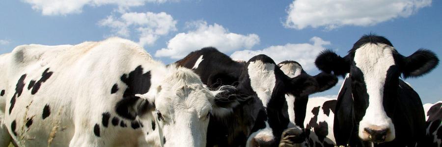¿Cada vez comemos menos carne?