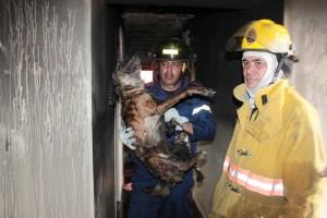 Murieron varias mascotas calcinadas y asfixiadas
