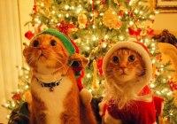 mensajes-gatos-navidad-2015-600x470