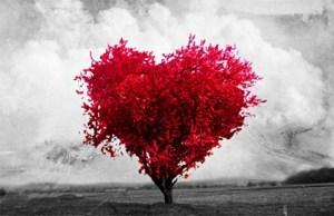 mágenes de Amor sin Texto