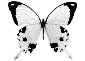 borboletas brancas