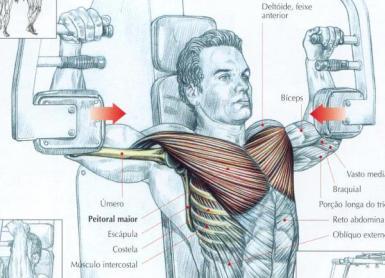 Trabalho feito pelos músculos (Foto: Reprodução)