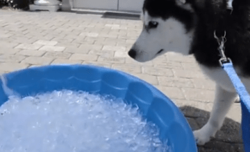 husky ice bucket