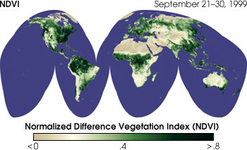 Global NDVI, Sept. 21-30th 1999. The composite is derived from  AVHRR imagery. (courtesy of NASA).