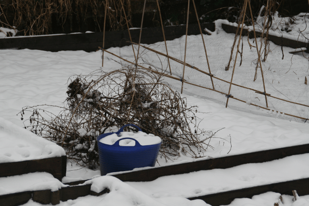 january_snow_garden