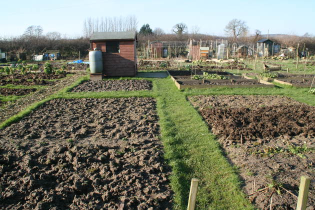 allotment_1