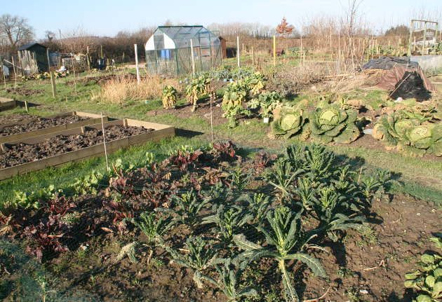 allotment_3