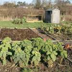 Snooping around allotments in February