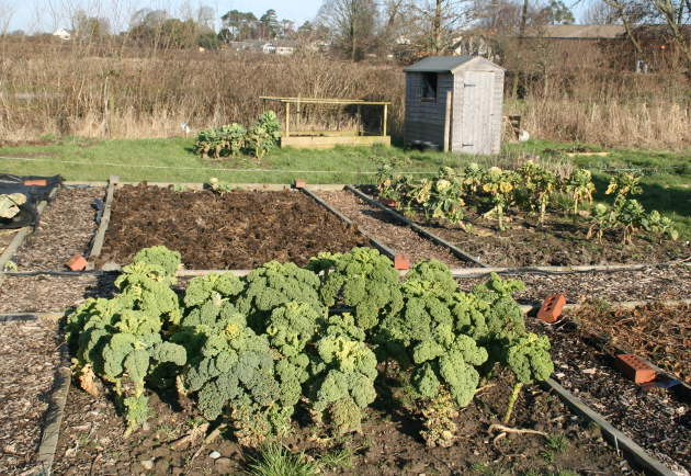 allotment_6