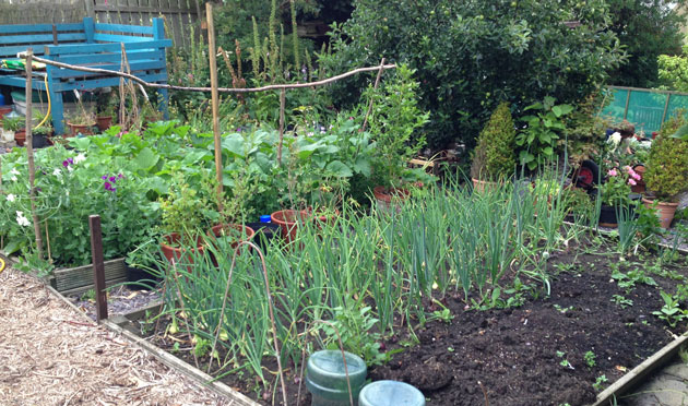 Welcome to the jungle - the garden has taken off! - dig the outside