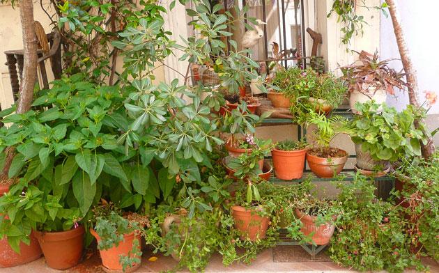 mouans-sartoux-front-garden