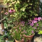 My Mediterranean inspired container garden