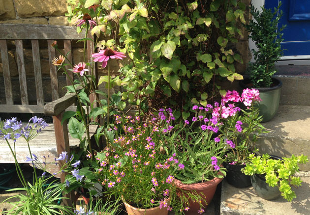 container-gardening-small-garden