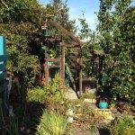 The great autumn garden clean up…
