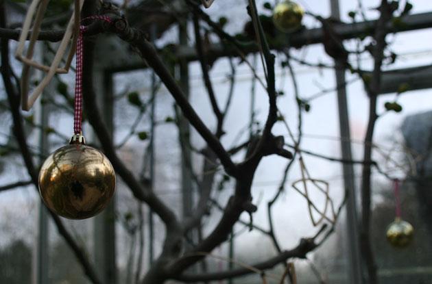 harlow-carr-christmas-2