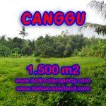 Tanah dijual di Canggu Bali 1,500 m2 di Canggu pererenan