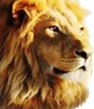 lion of judah - latter rain