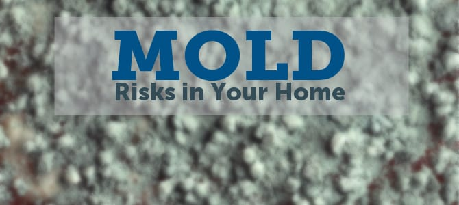 4 Things You Need to Know About Mold Risks in Your Home