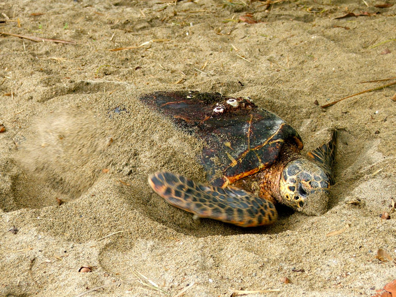 Watching Out For Trinidad Amp Tobago S Turtles Discover