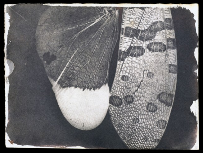 Insect-Wings-c-dot-1840-William-Henry-Fox-Talbot-c-National-Media-Museum-Bradford-slash-SSPL