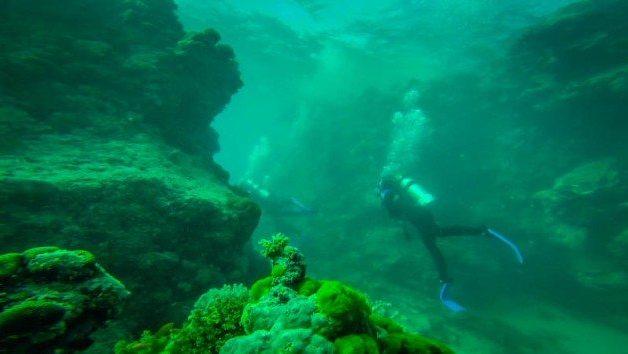 Great Barrier Reef Diving Australia