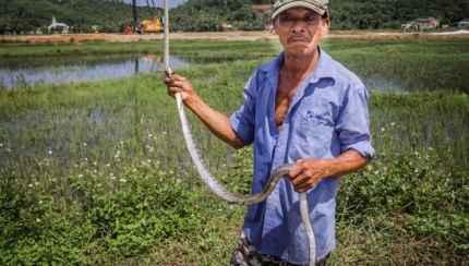 Vietnam Snake Man