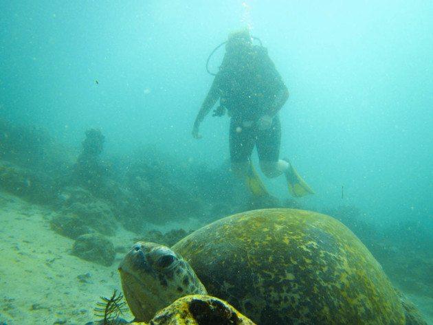 Complete guide to diving sipadan island divergent travelers - Sipadan dive sites ...