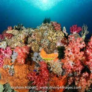 Colourful soft coral bommie