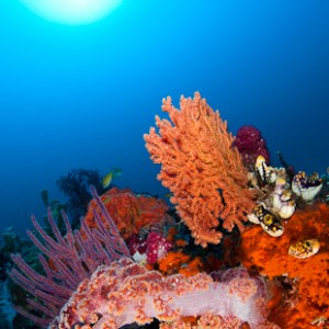 Colourful Reef Scene