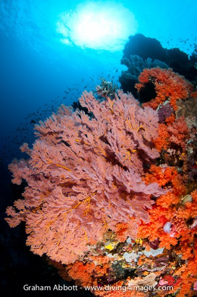 How about the chance to see scenery like at Lembeh?