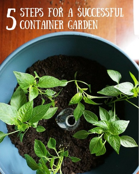 5 Steps for a Successful Container Garden