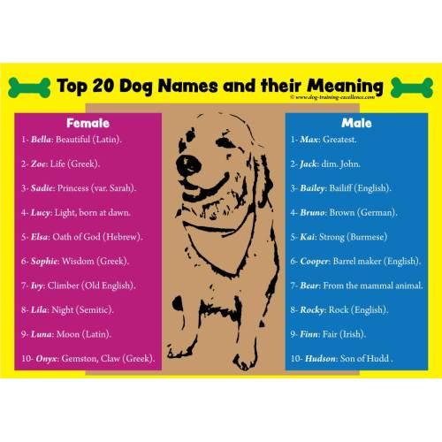 Medium Crop Of Latin For Dog