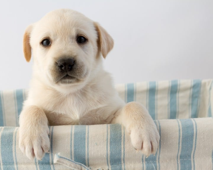 dog-behaviors-with-new-puppy