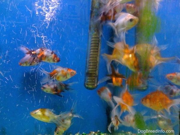 List of Freshwater Aquarium Fish List of Saltwater Aquarium Fish