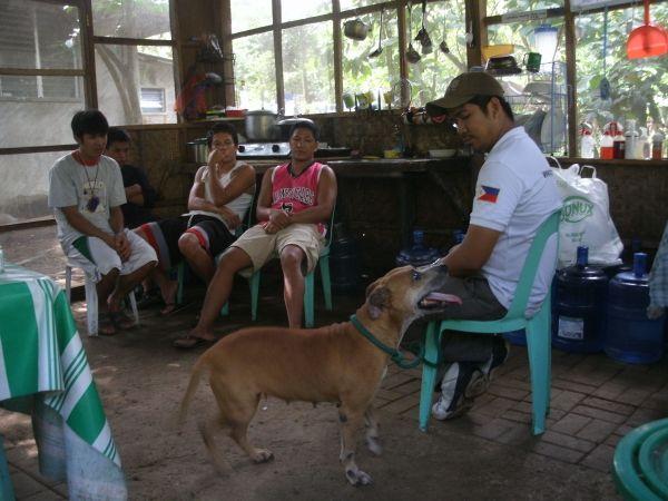 Laguna Pit Bull Rehabilitation Update