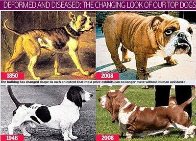 Pedigree Dogs Exposed