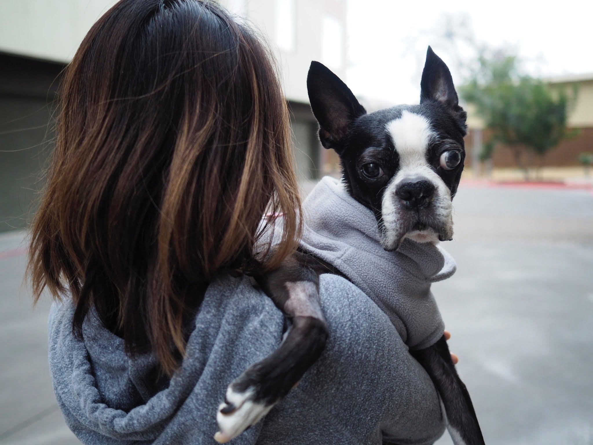 Fullsize Of Dog Acting Weird