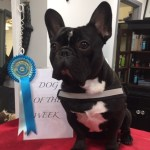 dog of the week 3-2-17