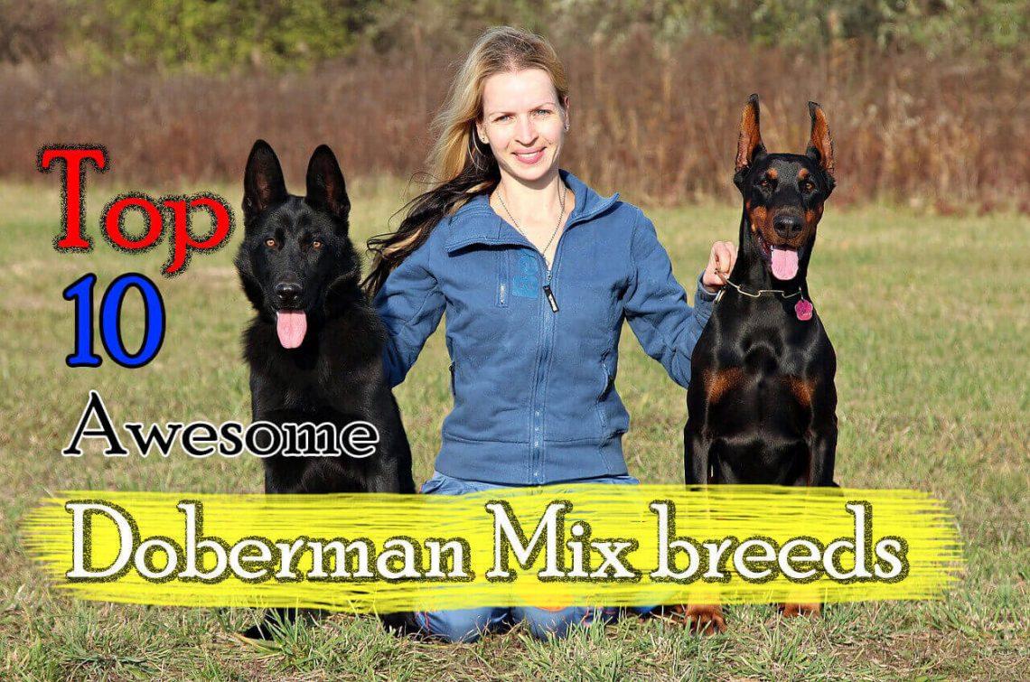 Top Kids Kids Doberman Mix Breeds German Shepherd Cross Breeds Are German Shepherds Good Cats Are German Shepherds Good bark post Are German Shepherds Good With Kids