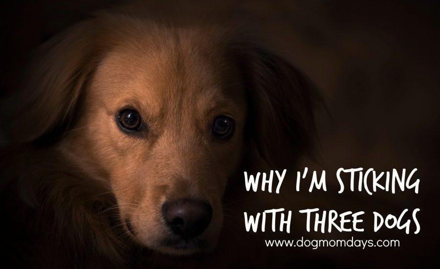 My Fourth Dog Adoption Was A Fail