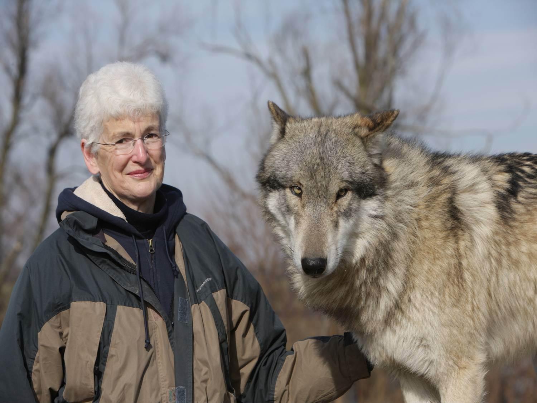 Fullsize Of Wolf Vs Dog