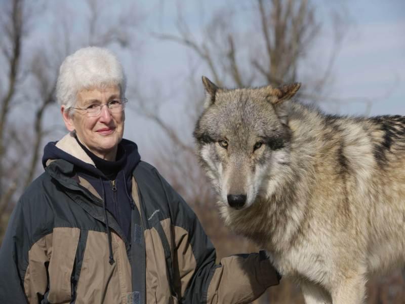 Large Of Wolf Vs Dog