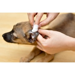 Seemly Cleaning Dog Ear How To Clean Your Home Remedies To Clean Dog Homemade Dog Ear Cleaner Essential Oils Homemade Dog Ear Cleaner Boric Acid bark post Homemade Dog Ear Cleaner