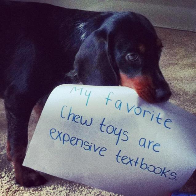 My Favorite Chew Toys Are Expensive Textbooks