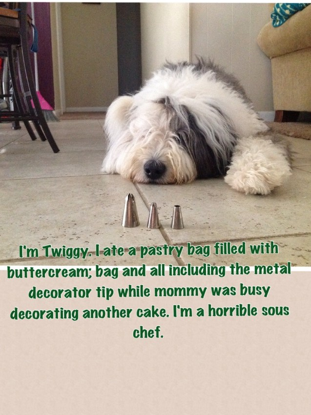Twiggy The Old English Sheepdog Thinks She Is