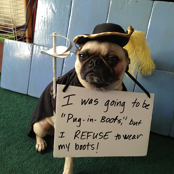 I Was Going To Be Pug In Boots For Pug O Ween