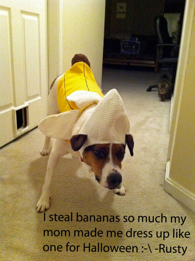 I Steal Bananas So Much My Mom Made Me Dress Up