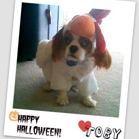 Toby Wishes You A Happy Halloween This Is The