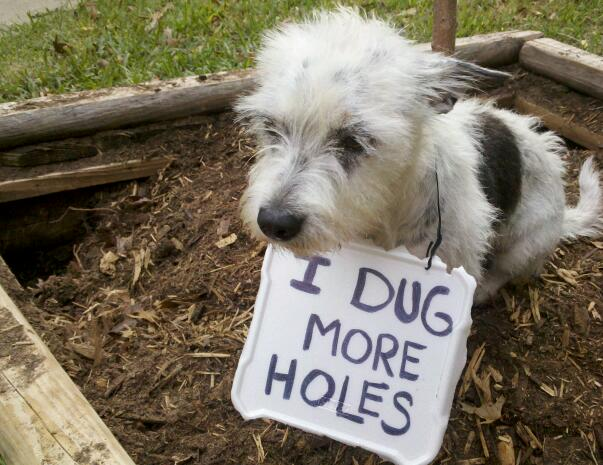 I-dug-more-holes
